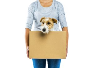 Millennial dog lovers buying homes for their pets