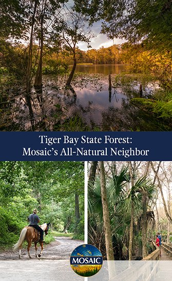 Tiger-Bay-State-Forest-Mosaics-All-Natural-Neighbor
